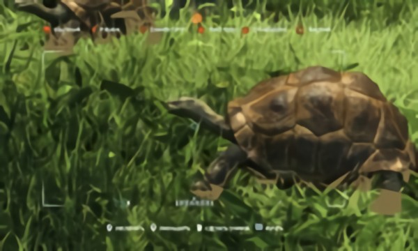 Far Cry 3 (Animals)